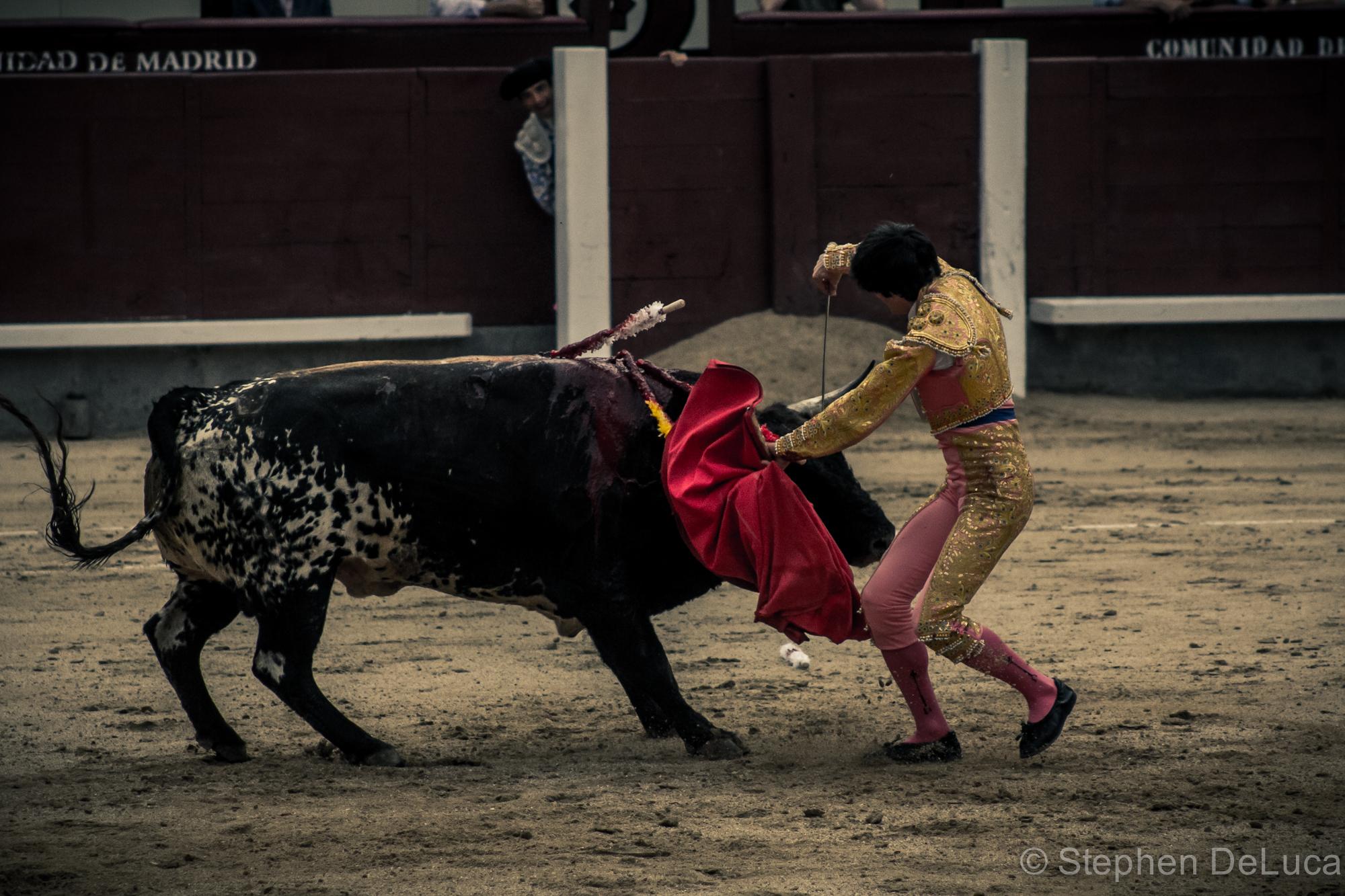 Photo: Bullfight-5