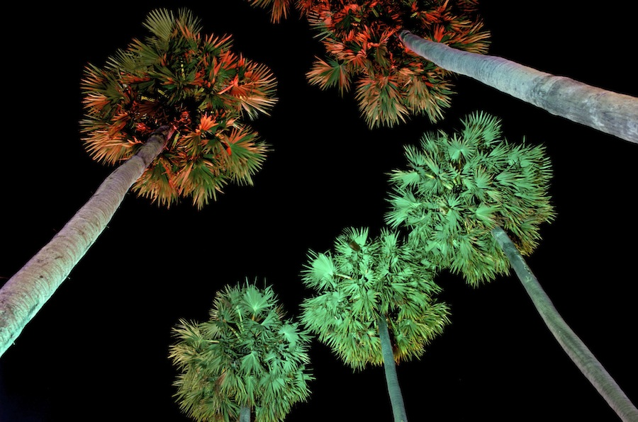 Night Palms by Mark Pope - Nature Up Close Trees & Bushes ( red, color, green, trees, night, palms,  )