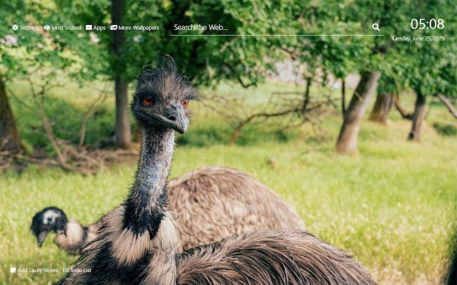 Ostrich Wallpaper HD New Tab Theme©