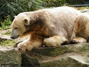 Photo: Hm, sollte Knut sich dazu gesellen ?