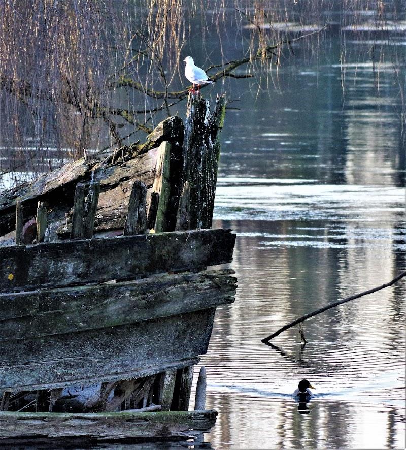 Luci nel fiume... di LASER19