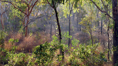 Photo: Day 4 - Roadside near Gungurul, Kakadu Highway © Ian Morris