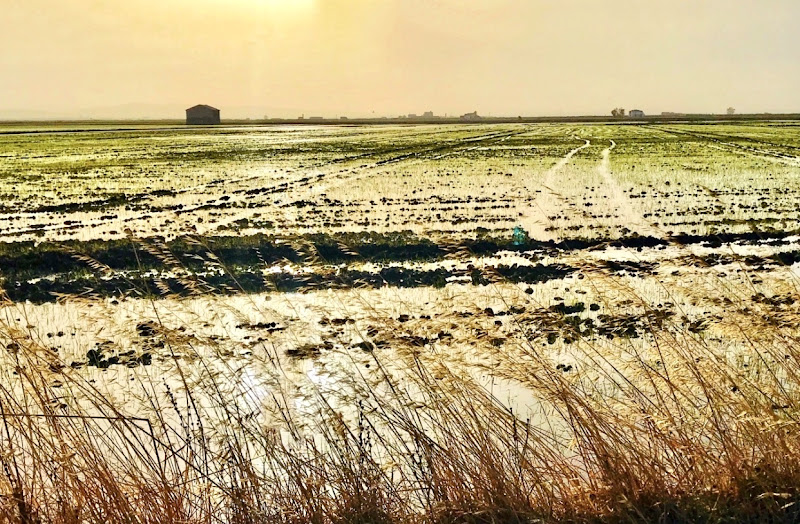 La casa tra le risaie di emidesa