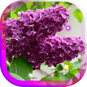 Lilac Beautiful live wallpaper