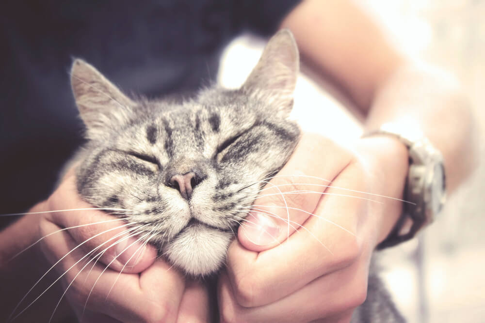 cat loves having its cheeks rubbed