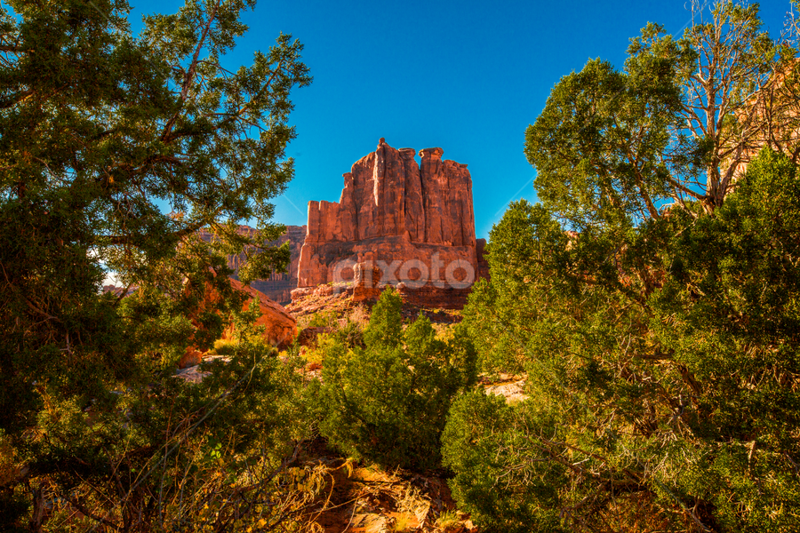 Framed in the Desert by Penny Miller - Landscapes Deserts ( moab, blue sky, desert, tree, utah, flora, sunny, beautiful, trees, rock, red rock formations, rock formation, pretty, sun )
