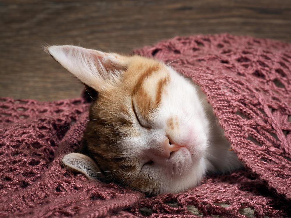 Adorable kitten wallpapers android apps on google play adorable kitten wallpapers screenshot thecheapjerseys Choice Image
