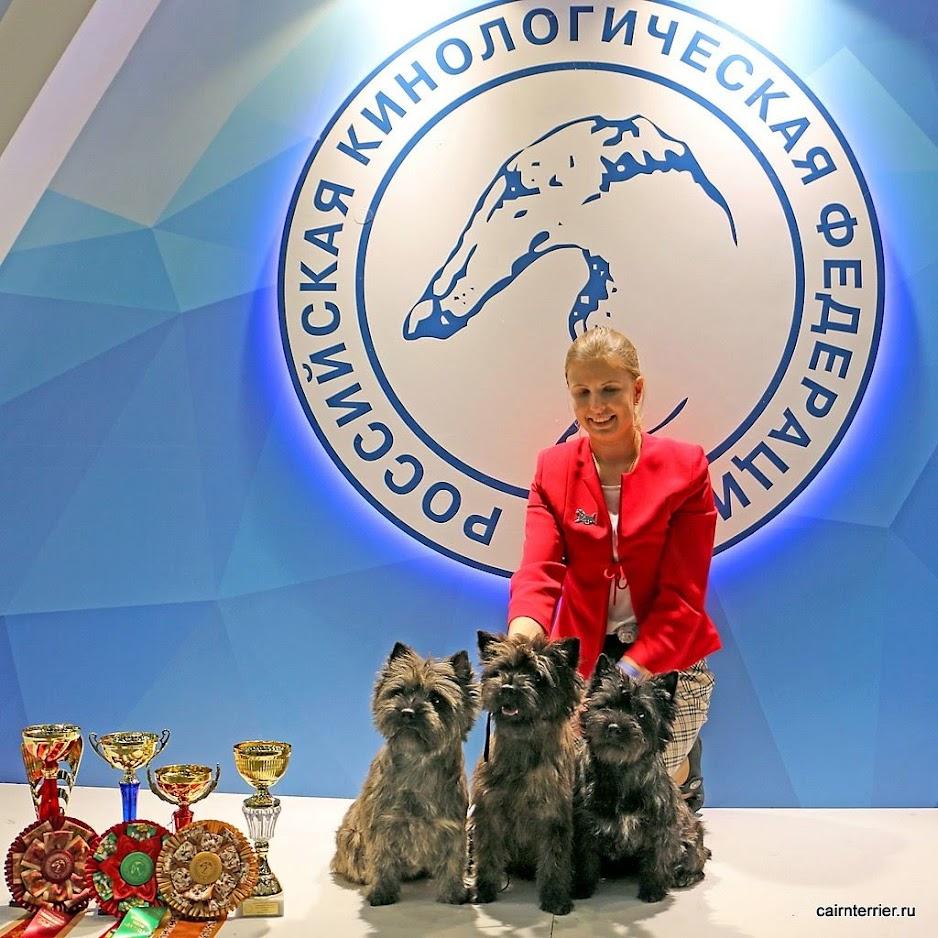 Фото керн терьеров Аксель, Пунш и Чита питомника Еливс с хендлером на призовом стенде выставки