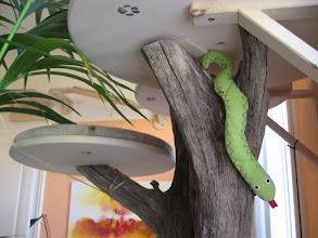 Photo: auch die gefährliche Schlange darf nicht fehlen (Katzenzimmer)