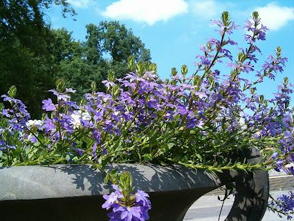 Kwiaty Balkonowe Do Wiszacych Doniczek Najladniejsze Gatunki Twojogrodek Pl