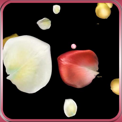 Petals Live Wallpaper Icon