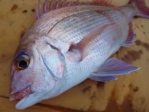 Photo: 綺麗な真鯛キャッチ!
