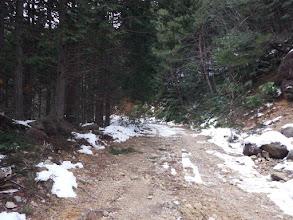 林道に雪は少なく