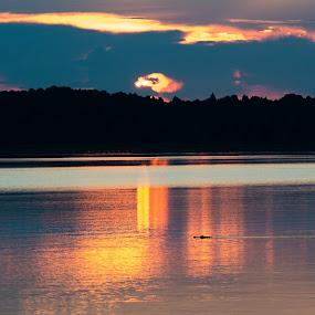 Gator Morning by James Newberry - Landscapes Sunsets & Sunrises ( nature, alligator, lake, sunrise, morning )