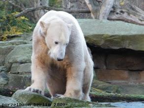 Photo: Knut schaut sich mal um ;-)
