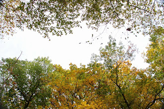 Photo: Looking up between the tree lines along the Fishing River.Excelsior Springs, Mo.