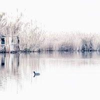 Pace e solitudine
