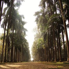 treeeeeeeeeeee by Sayan Basu - City,  Street & Park  City Parks