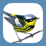 App Icon for Sibley Birds 2nd Edition App in Korea Play Store
