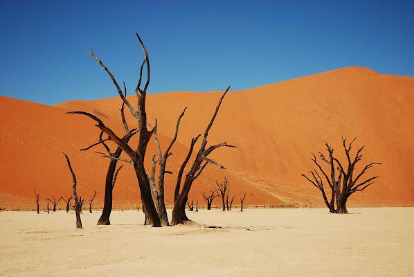 Namib desert  di cicciobello