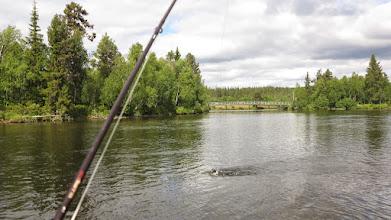 Photo: Fast fisk i Rasteselet
