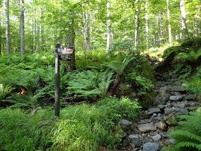 ミドリ池入口