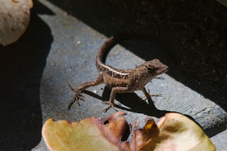 Photo: Gecko?
