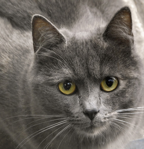 if eyes could speak by Ghislain Vancampenhoudt - Animals - Cats Portraits