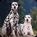 Dalmatian Live Wallpaper icon