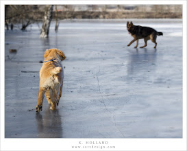Photo: Buddy on ice Nr. 4