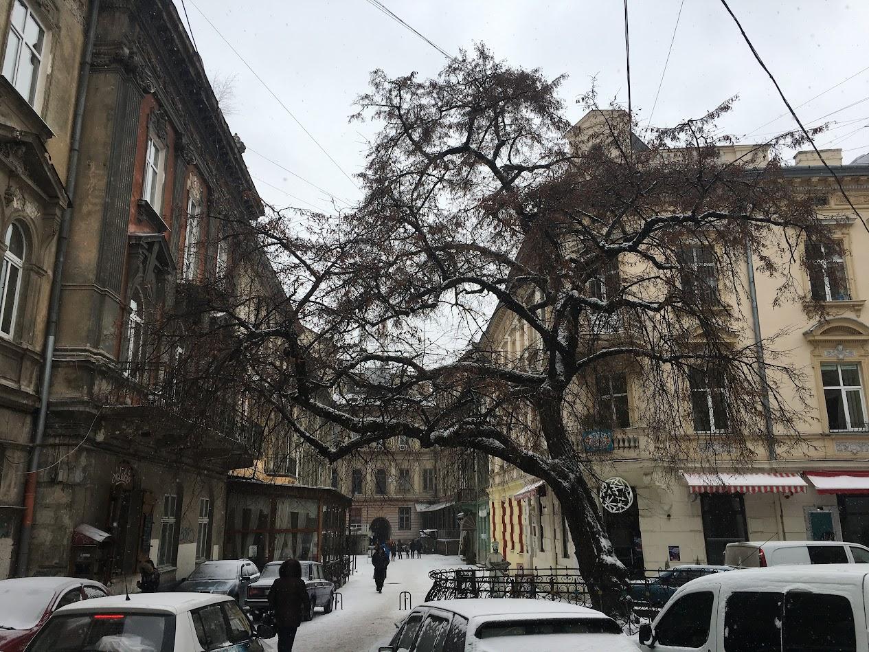 Lviv Sokak