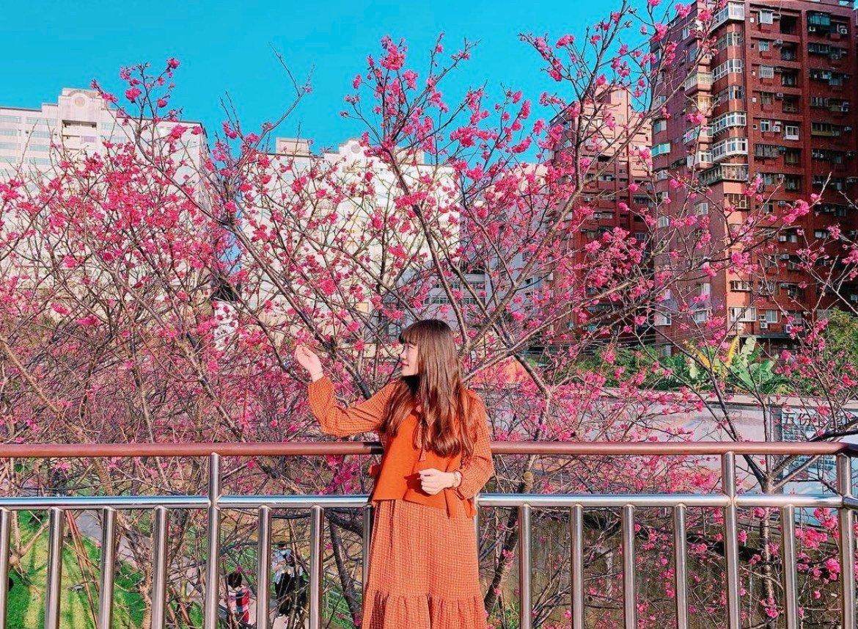 2021櫻花季,到陽明山平菁街42巷賞櫻花