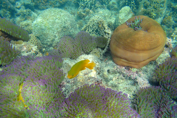 Spot colourful corals around Koh Tan