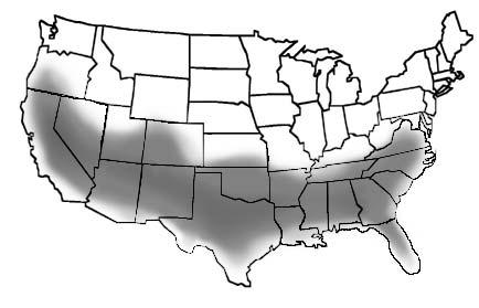Habitat of Black Locust / New Mexican Black Locust