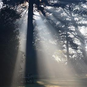 The Light From Above by Carla Maloco - Landscapes Weather ( landscape, light, rays, sun, mist, Tree, Nature, Sky, , #GARYFONGDRAMATICLIGHT, #WTFBOBDAVIS )