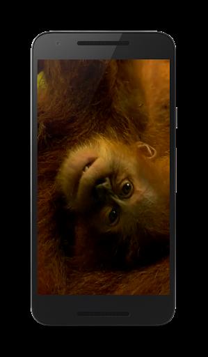 3 D 猿