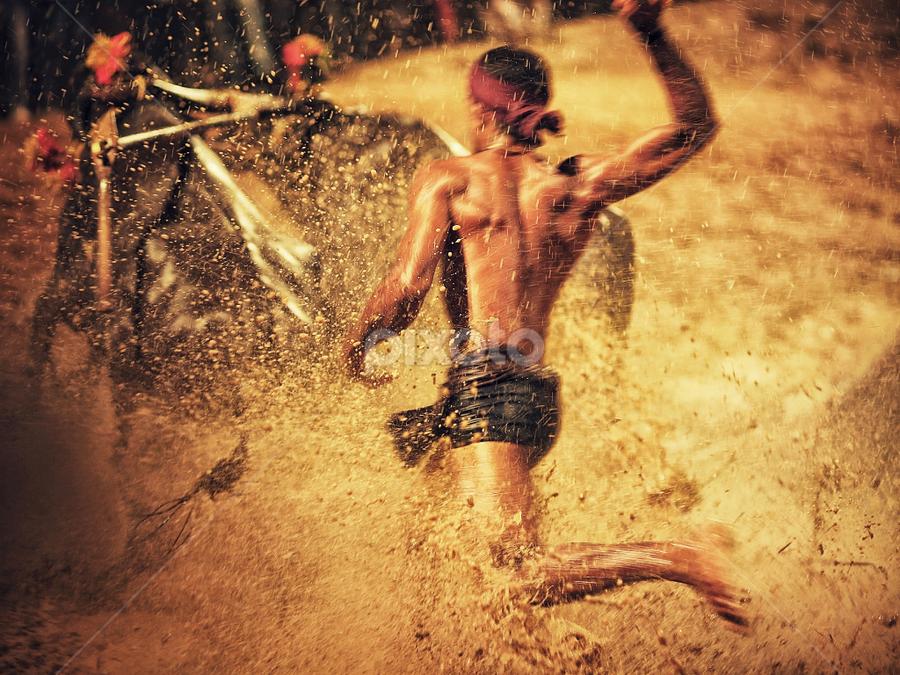 Kambala, Buffalo Race  by Soumya Geetha - Sports & Fitness Other Sports