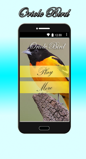 Oriole Bird Sounds