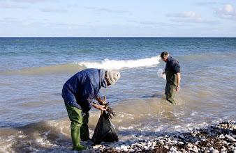Photo: Frode ta'r en god kvist Langfrugtet klørtang der lige netop er smidt ind af bølgerne, der rev det løs fra stenen, det stod på. Jan er ved at lægge an til at høste.
