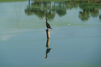 Photo: Puzzled bird