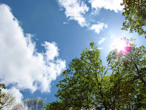 Photo: Bright sunlight over trees at Hills and Dales in Dayton, Ohio.
