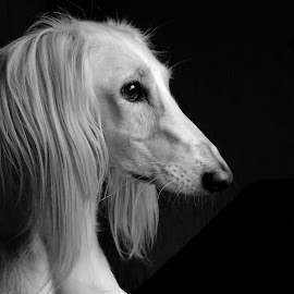 by Clare Draper - Black & White Animals (  )