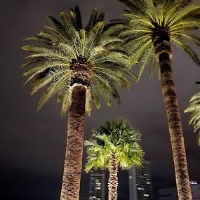 Vegas Baby1 by Linda Brooks - City,  Street & Park  Night ( las vegas, backlit, palm trees, night photography )