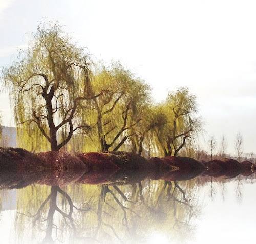 willows reflections by Diana Calvario - Instagram & Mobile iPhone