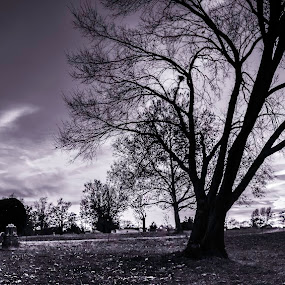 Sunset in the park B&W by Dan Miller - Novices Only Landscapes ( park, tree, black and white, sunset, landscape, golden hour,  )