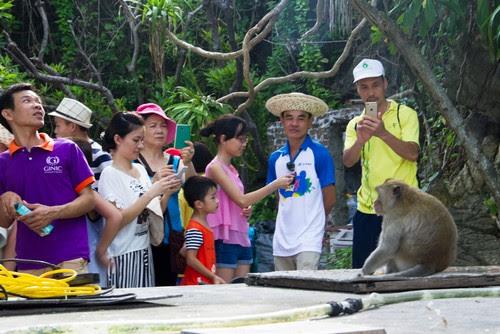 Đảo khỉ Cát Bà và những sứ giả du lịch