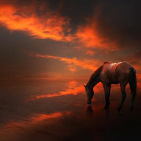 The Horse by Zainal Arifin  - Digital Art Things