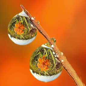 Couple by Faiq Alfaizi - Abstract Water Drops & Splashes