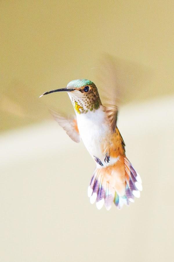 Humm? by Johannes Bichmann - Animals Birds