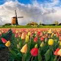 Amsterdam: La guida icon